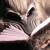 ysengrin: (reading)