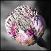 gypsy: (beauty: cocoon flower)