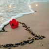 ext_6407: (heart hibiscus)