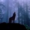 bludrgn: (blue-wolf) (Default)