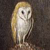 tree_and_leaf: Watercolour of barn owl perched on post. (Owl)