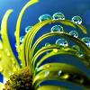 starlurker: (dew on petals)