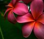 hani_backup: (Flowers)