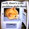 matociquala: (problem cat)