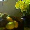 matociquala: (daffodils)