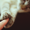 surpassingly: (kitteh: reaching out for your hand)