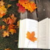 ily: (autumn book leaves)