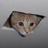 ewx: (ceilingcat, Ceiling cat)