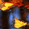 autumnvampire: (Autumn leaves on the water)