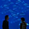 rai_ryu: (Aquarium)