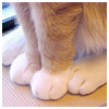 sid: (pretty Cat's paws)