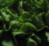 zing_och: close-up of a head of lettuce (salad)