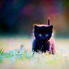 nallkun: ([Stock] Kitten)