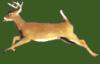 badman14: (deer)