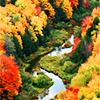 kol: (Seasonal: Autumn2)