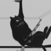 boysie: Stolen from tumblr. (black, cat)