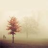 scatteredscript: (fogged)