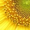 project_sunshine: (sun)