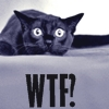 tenaya_owlcat: (WTF!)
