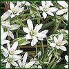 cereta: Flowers (Flowers)