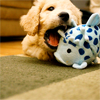 daydream: (puppyfun)
