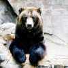 signifier: a grizzly bear (Ourfa: WHAT IF THERE'S BEARS)