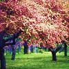 wildramblings: (trees) (Default)