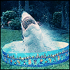 mokie: A large white shark rearing from a tiny child's pool (devious)