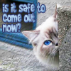 quillori: photo of cat peering round corner, text: is it safe to come out now? (comment: safe to come out?)