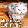 quillori: photo of a cat with its fur up, text: what makes you think I'm cranky? (mood: disgruntled)