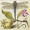 perverse_idyll: (dragonfly)