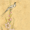 quillori: bird and flower illustration from the Haft Awrang (stock: haft awrang bird)