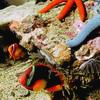 lilibeth: (reef)