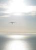 lilibeth: (sunset hang-glider)