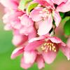 wenchpixie: (stock spring flowers)