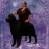 skogkatt: (Giant Dog)