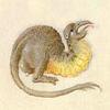 quillori: a small, cute, imaginary creature from a psalter (subject: cute critter, stock: cute critter, mood: cute)
