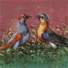quillori: ilustration of two birds (stock: two birds)