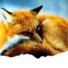 lipstickcat: (fox)