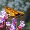 vamysteryfan: (butterfly)