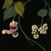 quillori: decoupage flowers (stock: decoupage)