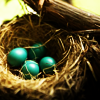 teigh_corvus: ([Misc.] Home nest)