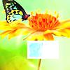 untapdtreasure: (butterfly)