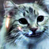 violaceous: (Alice: mrrrow)