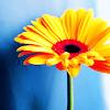 jebbypal: (flower)