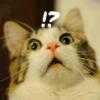kittyrefuge: (Oh my...)