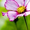 lina_trinch: (flower)