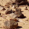 avaragarda: Rocks scattered across the Adrar Reg in Mauritania, a bleached white branch lying among them. (crumbles to the ground)