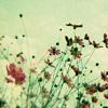 elz: (flowers)