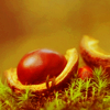 rainsinamorata: (Nature - conkers)